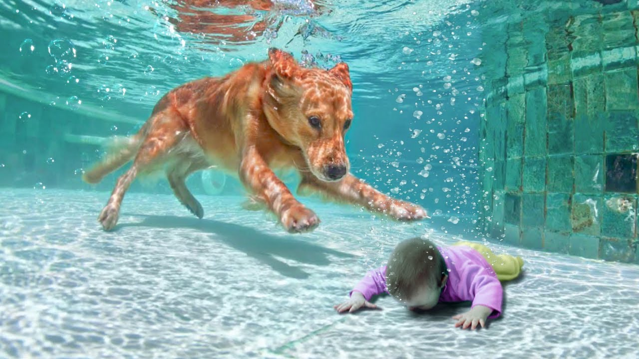 Download 12 Animal Heroes That Saved People's Lives