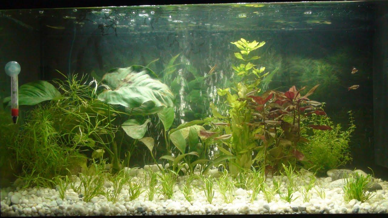 Primeros pasos en acuario plantado y plantas tapizantes for Plantas de acuario
