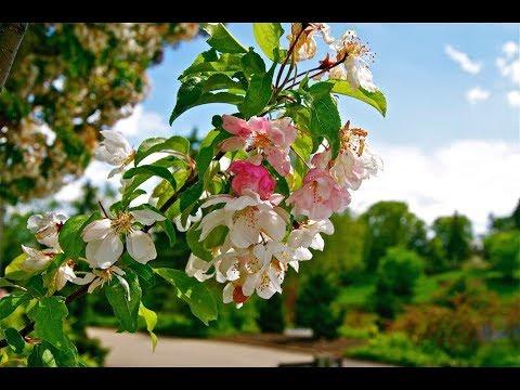 Chicago Botanic Garden - Spring