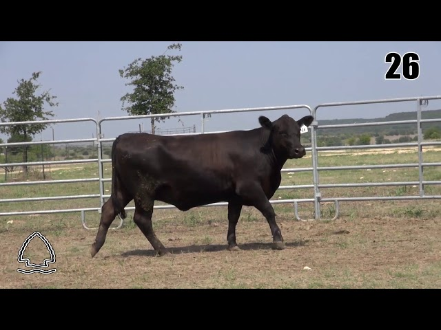Pearcy Angus Ranch Lot 26
