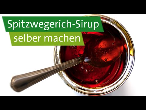 diy spitzwegerich sirup mit anis gegen erk ltung selber machen youtube. Black Bedroom Furniture Sets. Home Design Ideas