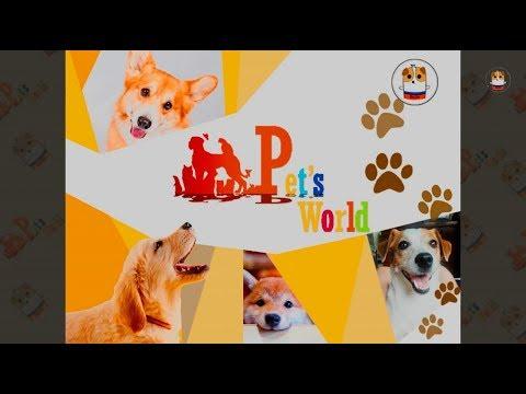 Funny Dog Compilation 2017 # 14