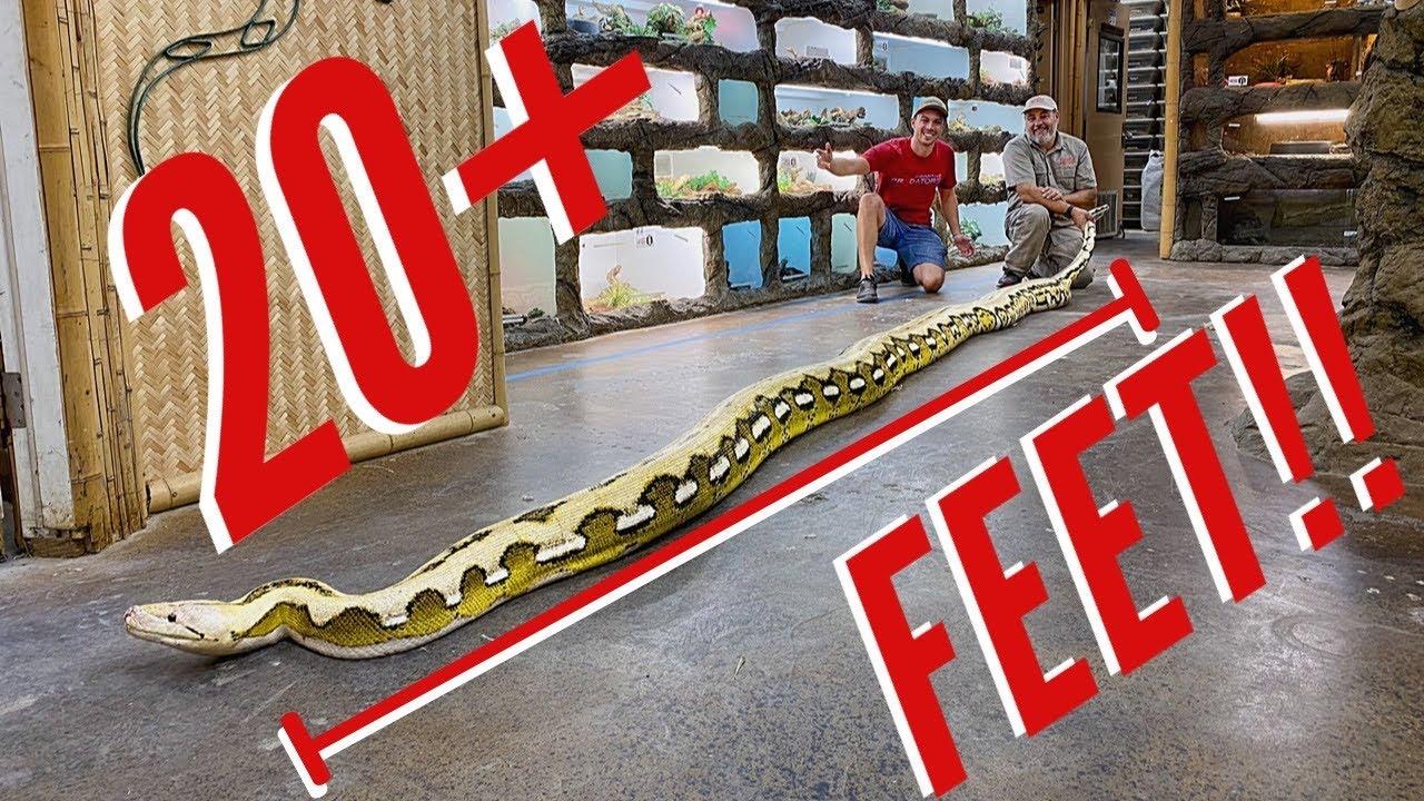 LA's Largest Snakes!