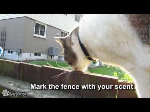 Trailer do filme Fencewalker