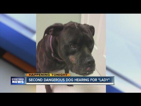 Second dangerous dog hearing for pit bull named