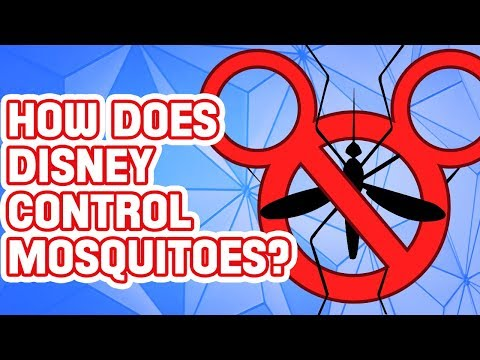 Maddox - Ever Wonder Why Are There No Mosquitoes at Walt Disney World?
