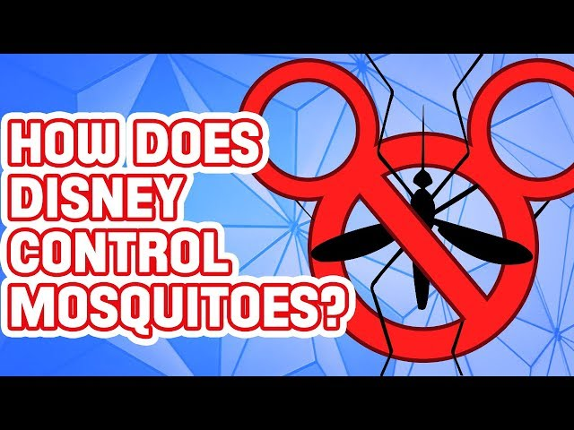 Why You Won T Find Mosquitoes Or Midges At Disney World Florida