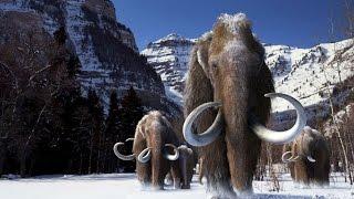 Teoria wielkiego zabijania - dlaczego mamuty wyginęły?