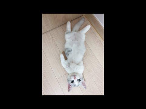 [쥐라기냥실시간0920 1부]카모미&길냥이기부 cute cat