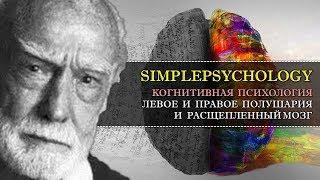 когнитивная психология #18. Левое и правое полушария и расщепленный мозг