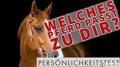 ❤️️ Welches Pferd passt zu dir? Persönlichkeitstest! ❤️️
