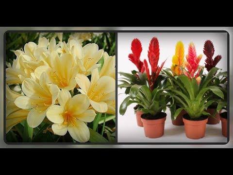 Топ комнатных растений, красиво цветущих в тени