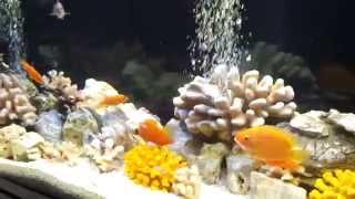 аквариумы на заказ(Интернет-магазин предлагает свои услуги по продаже оборудования, изготовлению, оформлению и обслуживанию..., 2014-09-22T19:59:56.000Z)