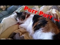 A Relaxed Cat's Purr - ASMR???