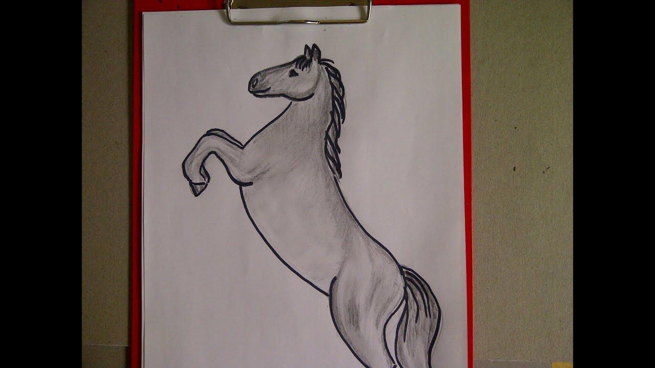Zeichnen Lernen Für Anfänger Pferd Malen Pferdeportrait Learn To Draw A Horse