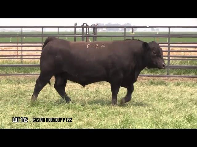Dal Porto Livestock and Rancho Casino Lot 112