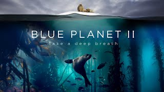 Blue Planet II : Le Prequel
