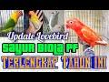 Update Lengkap Harga Lovebird Sayur Pb Biola Pf Biar Tetap Semangat Beternak  Mp3 - Mp4 Download