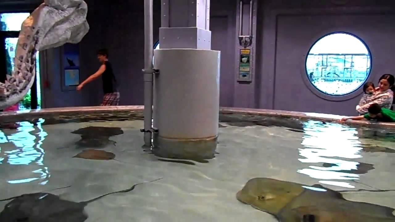 Tellez Majay Kemah Boardwalk Stingray Aquarium Houston Tx