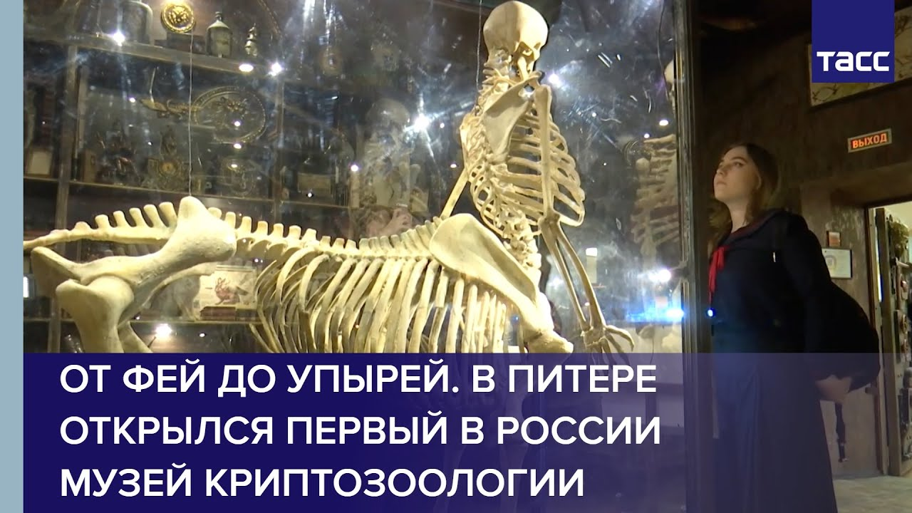 В Питере открылся первый в России музей криптозоологии
