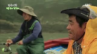 한국기행 - Korea travel_명물찾아 섬만리 4부 복더위 잡는 바다맛 도초도_#001