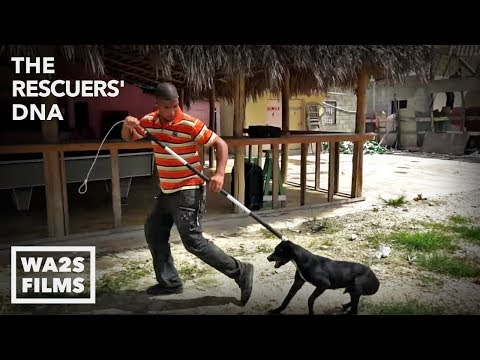 We Cried Tears Watching Them Catch Homeless Dogs - Hope For Dogs | My DoDo