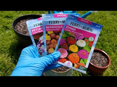 Planting Annual Flower Seeds in Containers   Marigolds, Petunias, and Zinnias