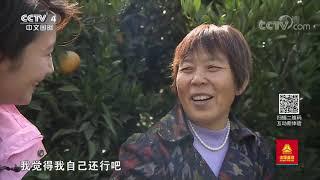《远方的家》 20191203 长江行(83)江上沙洲 意蕴悠长  CCTV中文国际