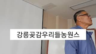 강릉 농업기술센터 강릉곶감 우리들농원스토리