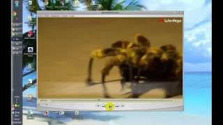 POPULARLY : Mutant Giant Spider Dog (SA Wardega)