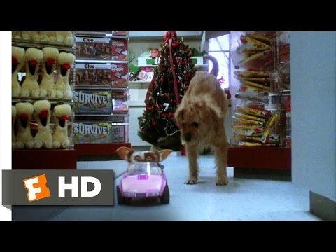 Gremlins (6/6) Movie CLIP - Gizmo to the...