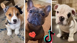 Funny Dogs of TIKTOK ~ Try Not to Laugh ~ Cutest TIK TOK Puppies Compilation ~ Dog Squad