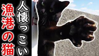 漁港に居た黒猫がかわいすぎた