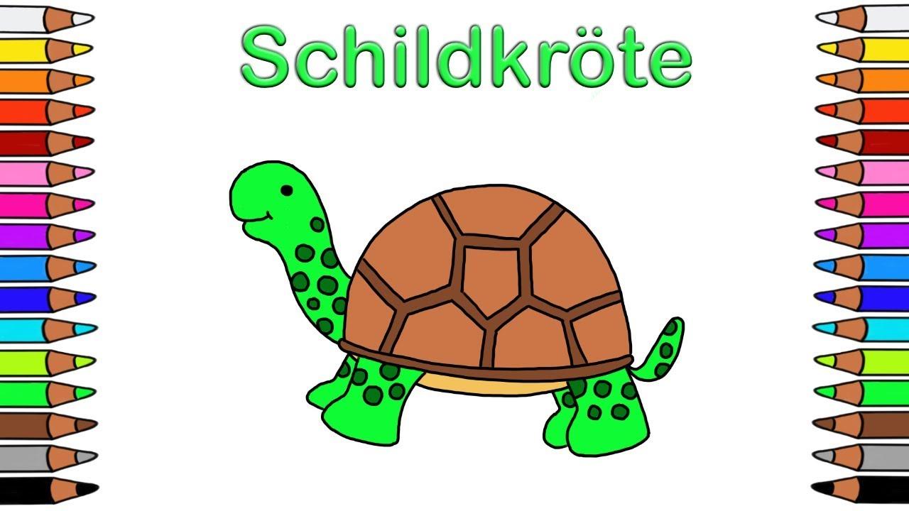 Malvorlage Schildkröte Einfach Coloring and Malvorlagan