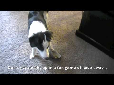 prevent-your-puppy-from-chewing-on-your-shoes