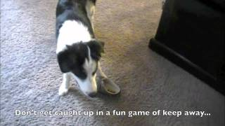 Prevent Your Puppy From Chewing On Your Shoes