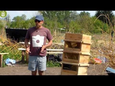 Petits elevages apiculture naturelle et poulailler