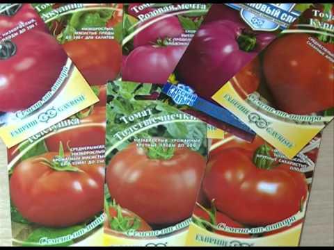 Формирование индетерминантных томатов в теплице в один