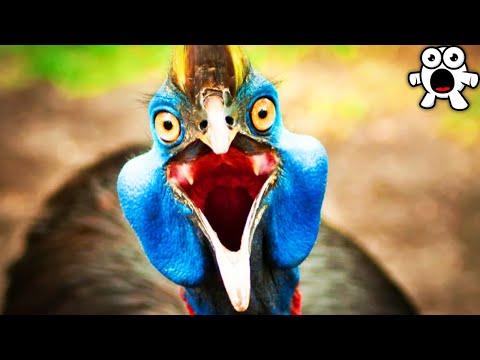 Most Dangerous Birds on Earth