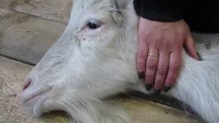 Обработка ран после стаи бродячих собак