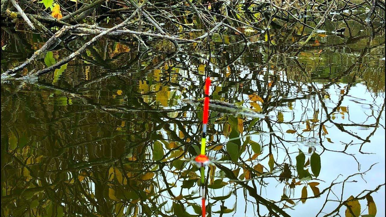 Осенние карасики на СЕКРЕТНУЮ ПОПЛАВОЧНУЮ УДОЧКУ! Рыбалка на диком болоте!