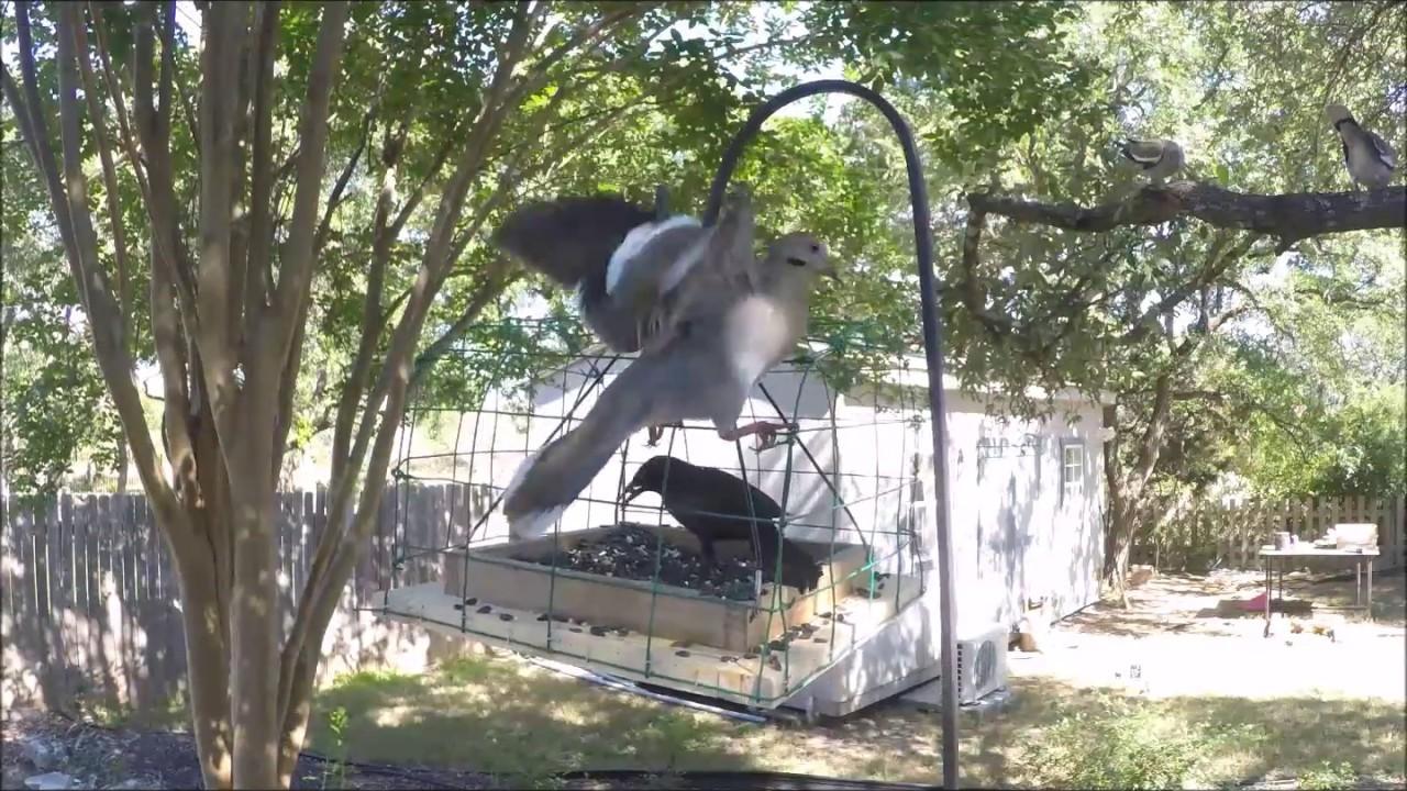 Pigeon Amp Dove Proof Bird Feeder Youtube