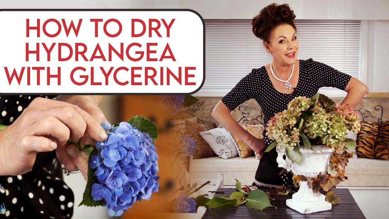 How to Dry Hydrangeas with Glycerin - YouTube