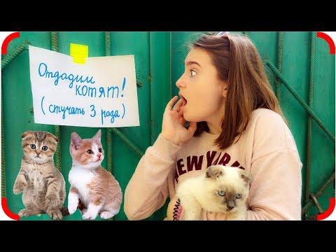 видео: Уговорила Маму Завести Котенка!!! Видео для детей