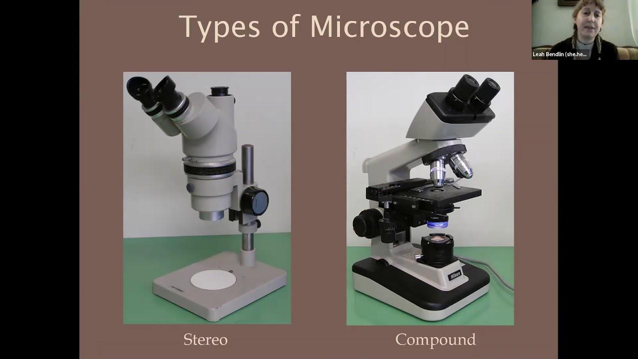 Intro to Fungal Microscopy