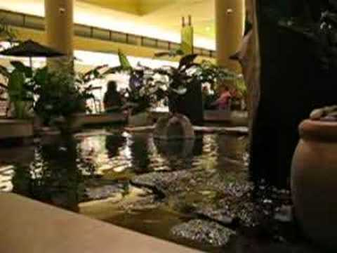 Serramonte koi pond daly city california youtube for Koi pond quezon city