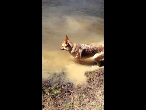 This Dog Loves To Swim