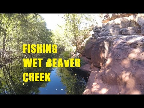 Arizona Anglers | Fishing Wet Beaver Creek