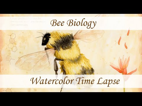 Bee Biology - Learn About Pollinators!