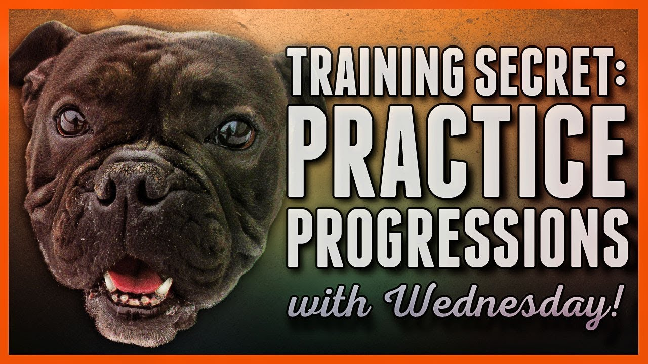 Dog Training Secret How To Use Progressions And Rehearsals Like A Pro Youtube